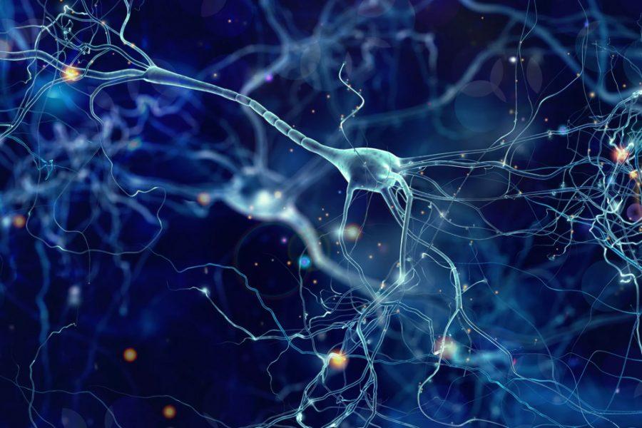 Реакции вегетативной нервной системы как сигналы стресса